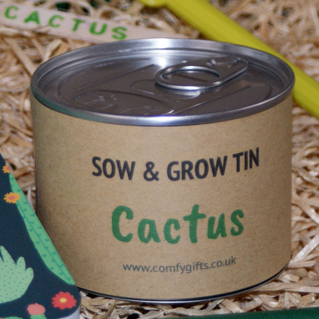 Fun grow your own cactus plants for children delivered