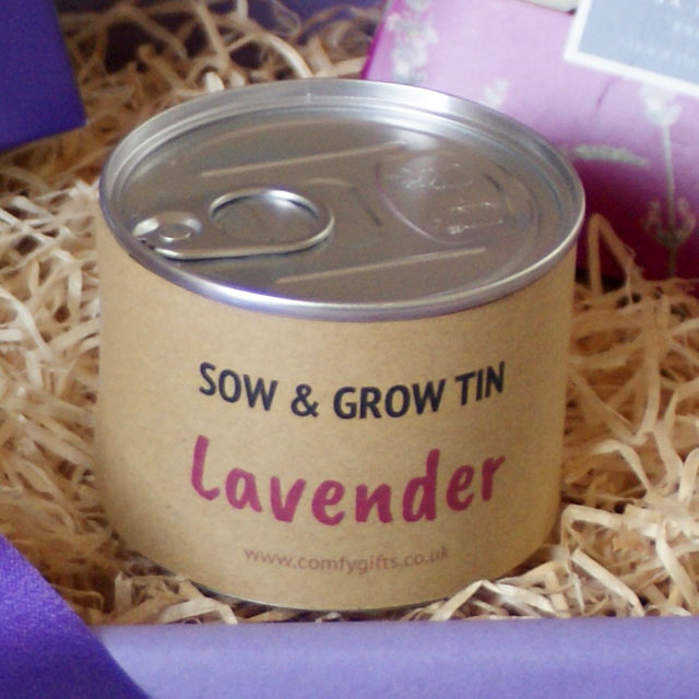 Grow your own lavender get well soon gifts UK